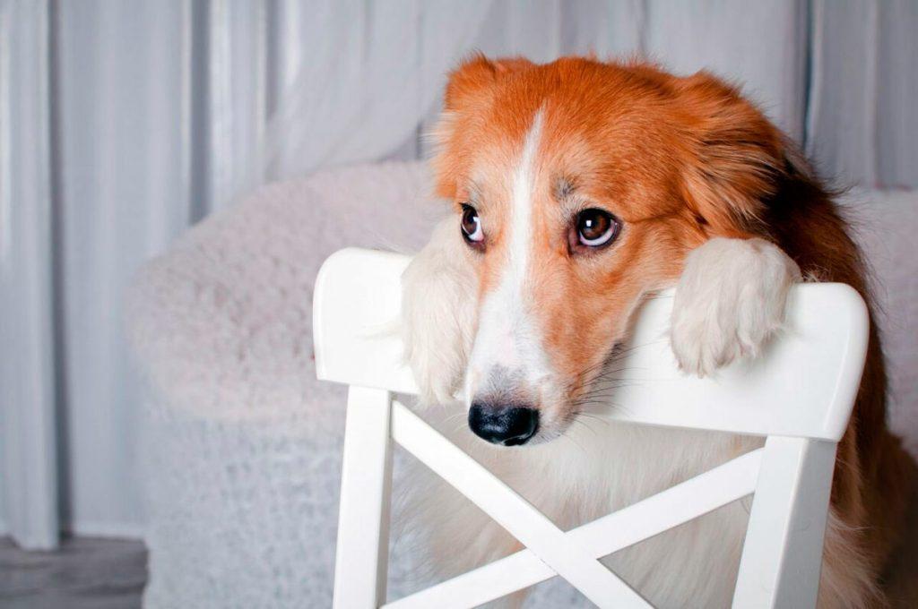 Как отучить собаку просить еду?